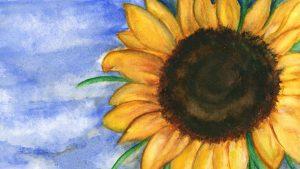 sunflowerwithblueskydesktop